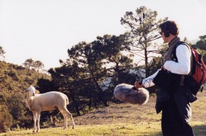 Recording sheep in Andalucia Spain 2000